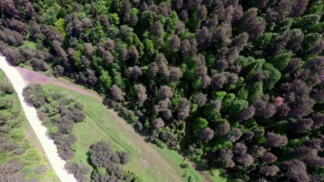 4K Aerial Shot Forest video