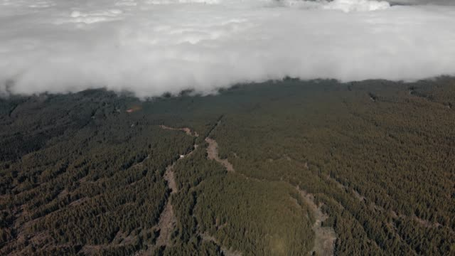 Aerial shot. Great natural phenomenon, Highland forest at the level of clouds. Canary Islands, Teide volcano