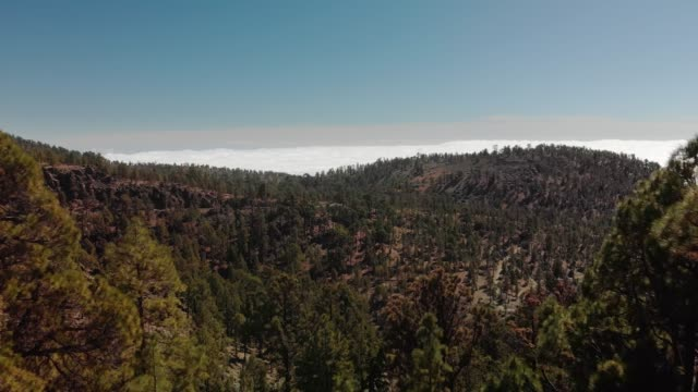 Aerial shot. Moving forward between the trees in the foreground, above the mountains and the green pine forest and above the clouds. Mountain valley with cars driving on the asphalt road going far. Spain, Canary Islands, Tenerife, Volcano Teide