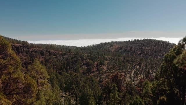 luftaufnahme. vorwärts zwischen den bäumen im vordergrund, über den bergen und dem grünen kiefernwald und über den wolken. bergtal mit autos, die auf der asphaltstraße weit fahren. spanien, kanarische inseln, teneriffa, vulkan teide - kiefernwäldchen stock-videos und b-roll-filmmaterial