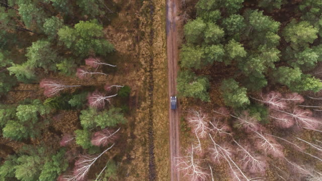 Aerial shot of 4x4 car in forest
