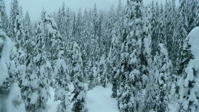 Aerial Shot Of A Foggy Winter Forest video