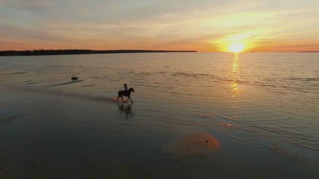 ビーチに沿って疾走馬騎乗の空中ショットは。 - 動物に乗る点の映像素材/bロール