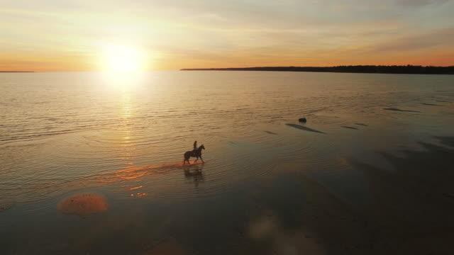 ビーチに沿って水のギャロッピング馬騎乗の空中ショットは。 - 動物に乗る点の映像素材/bロール