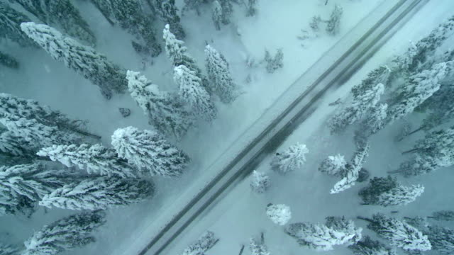 aerial shot of a misty winter road - trees in mist stock videos & royalty-free footage