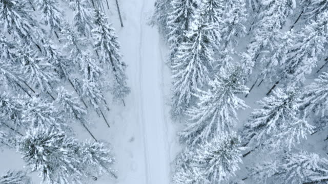 Aerial shot of a snowy footpath amongst the whitened trees video