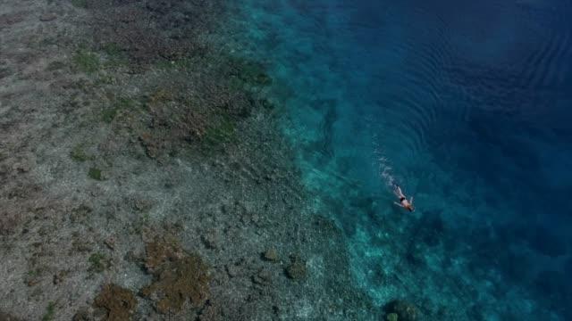 화창한 날에 열 대 해변의 공중 탄 - 항공기시점 스톡 비디오 및 b-롤 화면