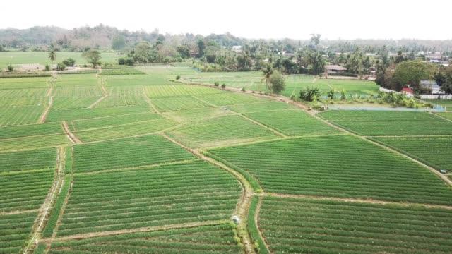 stockvideo's en b-roll-footage met luchtfoto van landbouw ui veld in azië - s