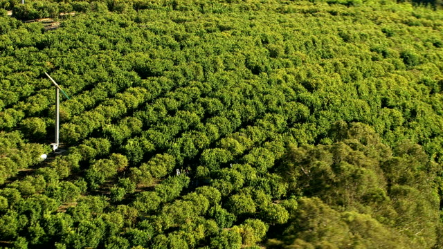 Aerial shot of agriculture & orchards video