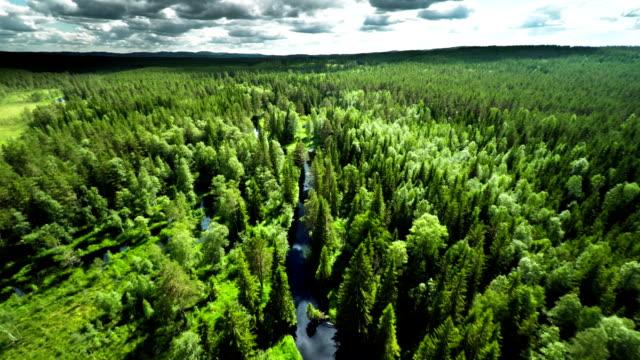 Luchtfoto van de boreale bossen in Zweden video