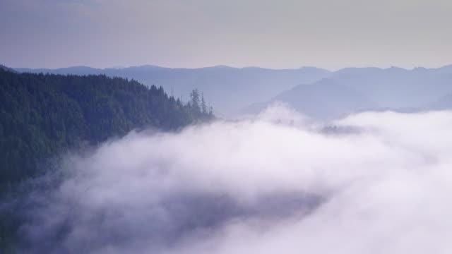 Aerial Shot of California Coastal Redwoods – film