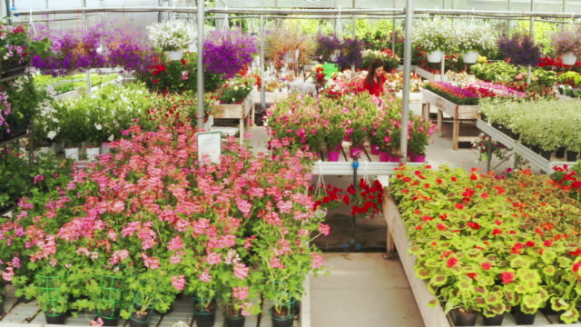vídeos de stock e filmes b-roll de aerial shot of different species of flowers in a plant shop greenhouse in a sunny day - liga desportiva