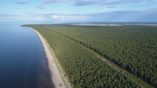 aerial shot of forest and beach - латвия стоковые видео и кадры b-roll