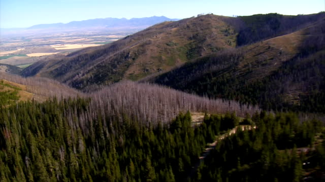 aerial shot of forest and mountains with dead trees aerial shot of forest and mountains with dead trees dead stock videos & royalty-free footage