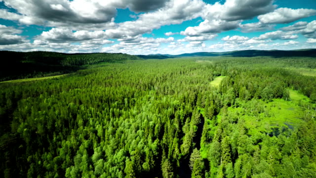 Aerial shot of Forest Wilderness video