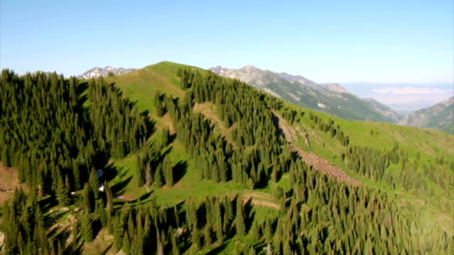 aerial shot of green forest and mountains with trail video