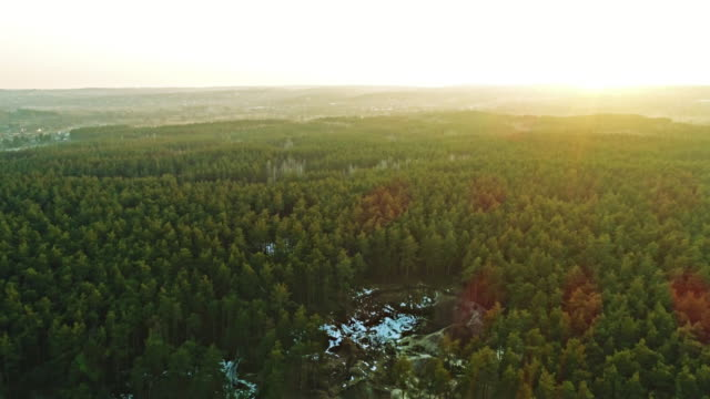Aerial shot of green forest video