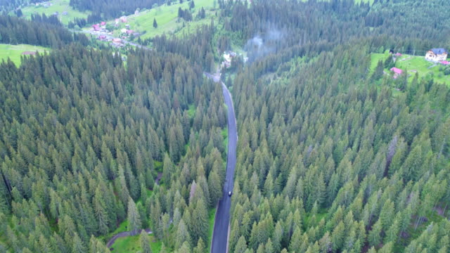 antenn skott av grön skog - städsegrön växt bildbanksvideor och videomaterial från bakom kulisserna