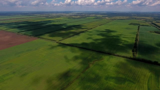 Aerial shot of green wheat fields with cloudy sky and Shadows from the clouds. Offers Beautiful Landscape of Green Fields. video