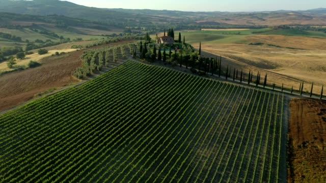 аэрофотосъемка холмов, виноградников и полей в сельской местности тосканы - вилла стоковые видео и кадры b-roll
