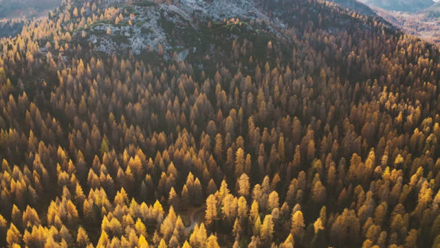 aerial shot of  Italian Dolomites with autumn trees, pan from forest to panorama video