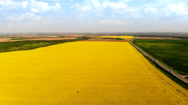 aerial shot of oil seed rape flowers - colza video stock e b–roll