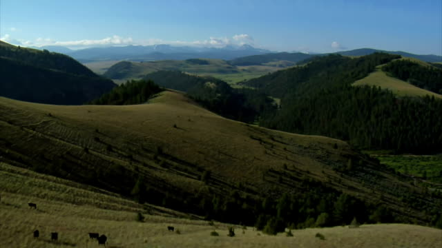 aerial shot of open rangeland with forest and mountains video