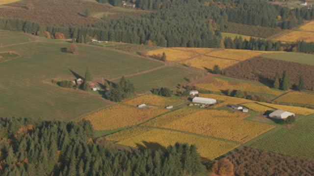 luftaufnahme des oregons willamette valley wine country. - tal stock-videos und b-roll-filmmaterial