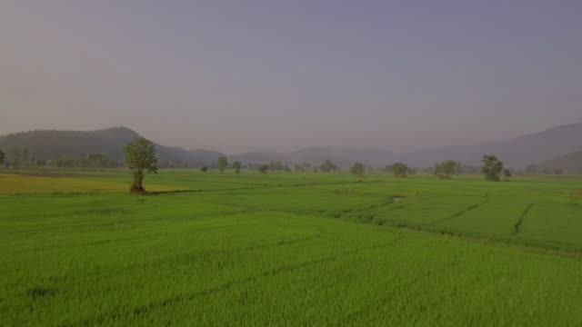 aerial shot of paddy field with mountain range in the background aerial shot of paddy field in early morning with mountain range in the background sukhothai stock videos & royalty-free footage