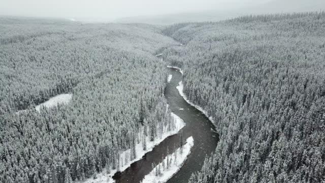 Aerial shot of pine tree in Winter