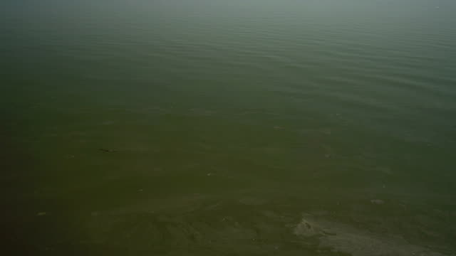 Aerial shot of polluted water video