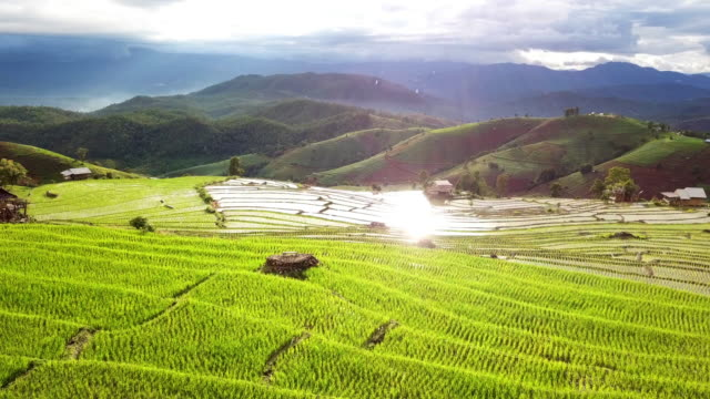 Aerial shot of rice terrace agriculture field of southeast asian with sunset Aerial shot of rice terrace agriculture field of southeast asian with sunset , 4K(UHD) , Agriculture concept sa pa stock videos & royalty-free footage