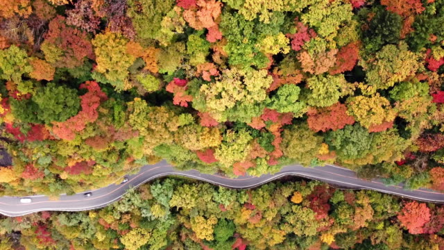 vídeos de stock e filmes b-roll de aerial shot of road way on the mountain in autumn time in japan - folha vermelha