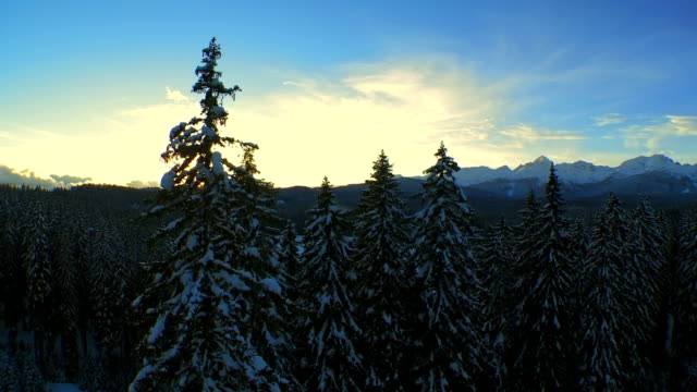 Aerial Shot Of Snowy Forest At Sunset video