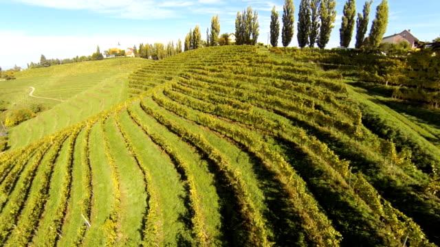 HD: Aerial Shot Of Terraced Vineyards video