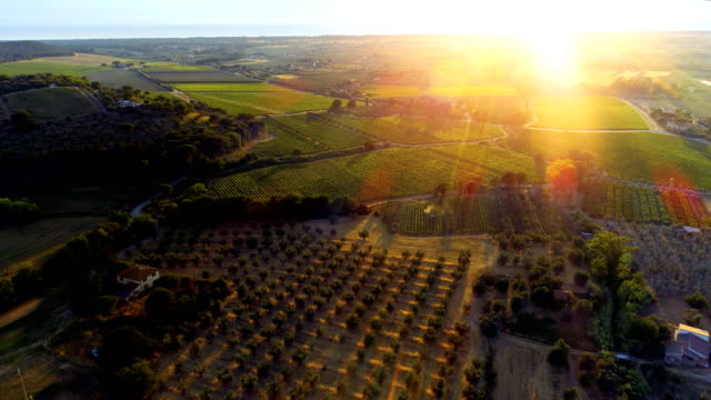 aerial shot of the beautiful italian countryside with it's farms, vineyards, olive trees, forests, hills and fields. - viticoltura video stock e b–roll