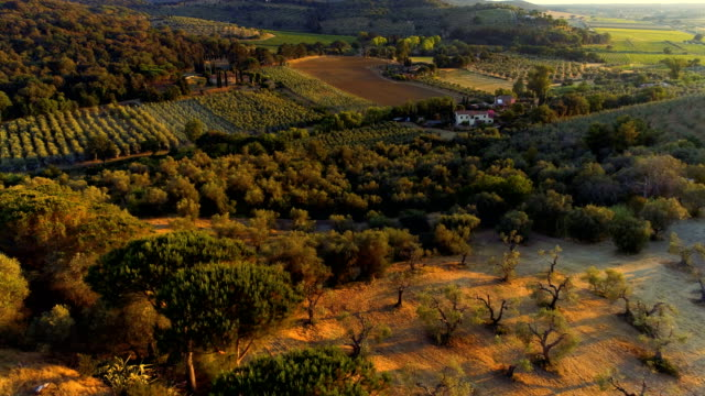 aerial shot of the beautiful rural area with farms, vineyards, olive trees, forests, hills and fields. - oliva video stock e b–roll