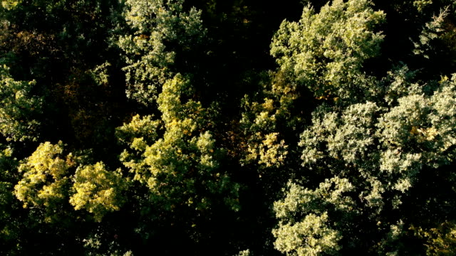 Aerial shot of the gorgeous green forest in the Carpathian Mountains in summer