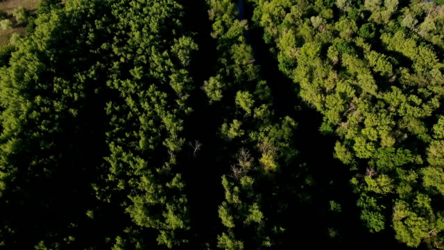 aerial shot of the green forest with mapke tree tops on a sunny day in summer - top filmów i materiałów b-roll