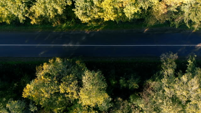 Aerial shot of the straight highway in the Carpathian Mountains in summer