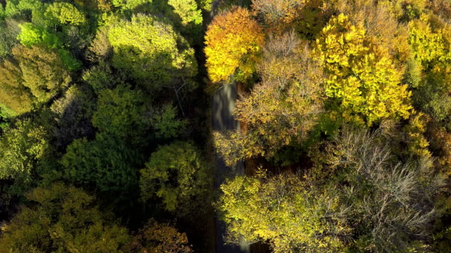 Aerial shot of trees in beautiful Fall color in the mountain forest video