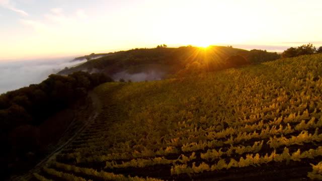 HD: Aerial Shot Of Vineyards At Sunset video