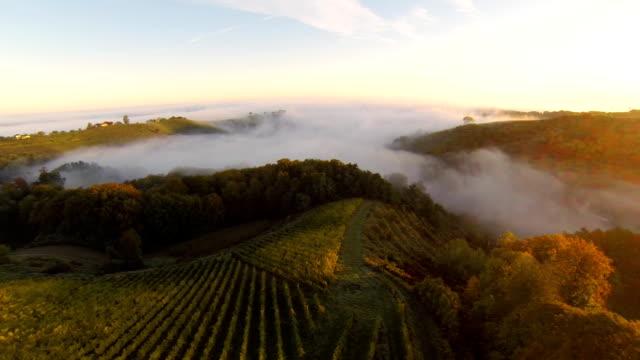 HD: Aerial Shot Of Vineyards In The Fog video