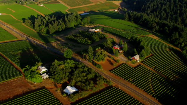 Aerial shot of vineyards, Willamette Valley Oregon video