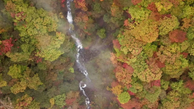 Aerial shot of Waterfall in Autumn with forest changed color at Nikko Japan Aerial shot of Waterfall in Autumn with forest changed color at Nikko Japan 4K(UHD) ginkgo stock videos & royalty-free footage