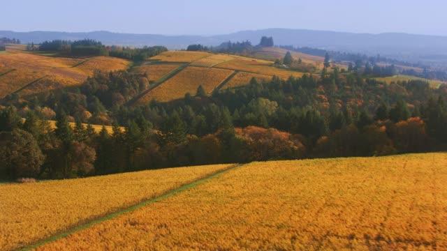aerial shot of willamette valley, oregon vineyards in fall color. - paesaggio collinare video stock e b–roll