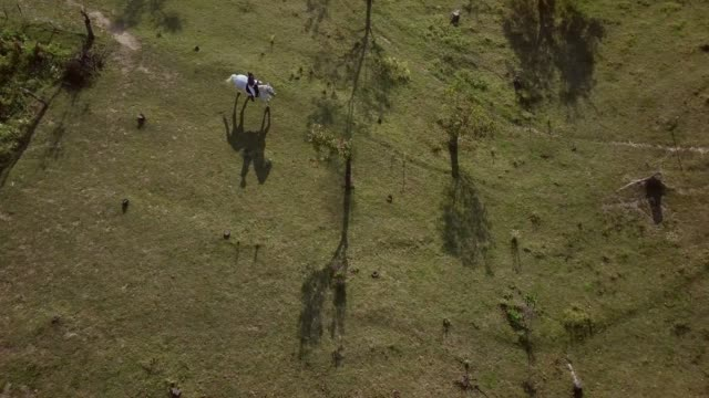 aerial shot of woman riding white horse on a field - sella video stock e b–roll