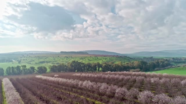 vídeos de stock e filmes b-roll de aerial shot over almond trees and green hills in the countryside - amendoas