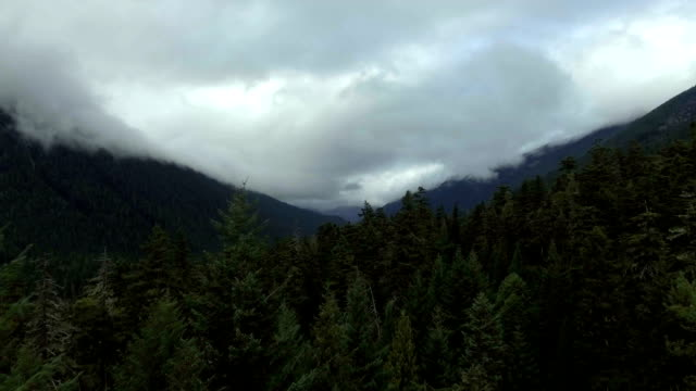 Aerial shot rising out of the forest to a dramatic landscape video