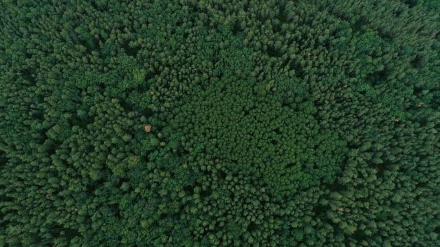 vídeos y material grabado en eventos de stock de aire tiro madera naturaleza paisaje árboles verdes campo - pino conífera